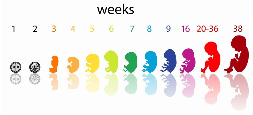 34 Saptamani de sarcina cate kg